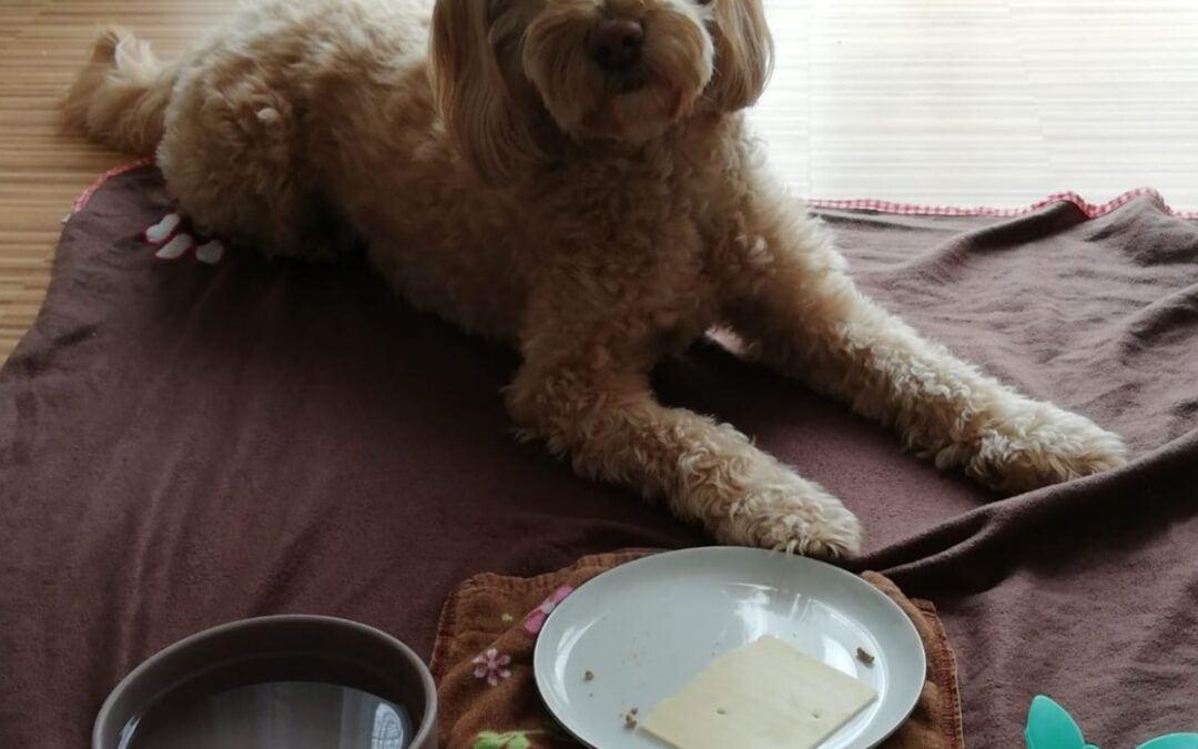Spielzeug mit Käse