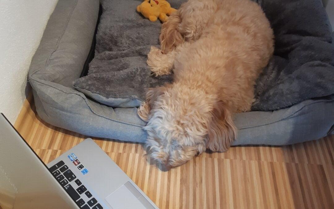 Sally im Hunde-Schooling